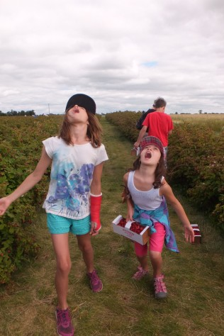 Berry picking - trying to catch